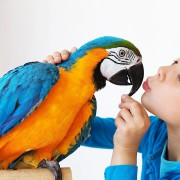 Birds As A Pet