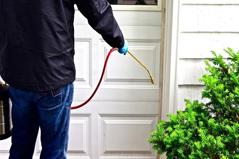 How To Fight Pest Infestation?