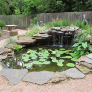 3 Best Fish To Put In Your Outdoor Fountain