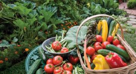 7 Reasons Why This Is The Year To Start A Vegetable Garden