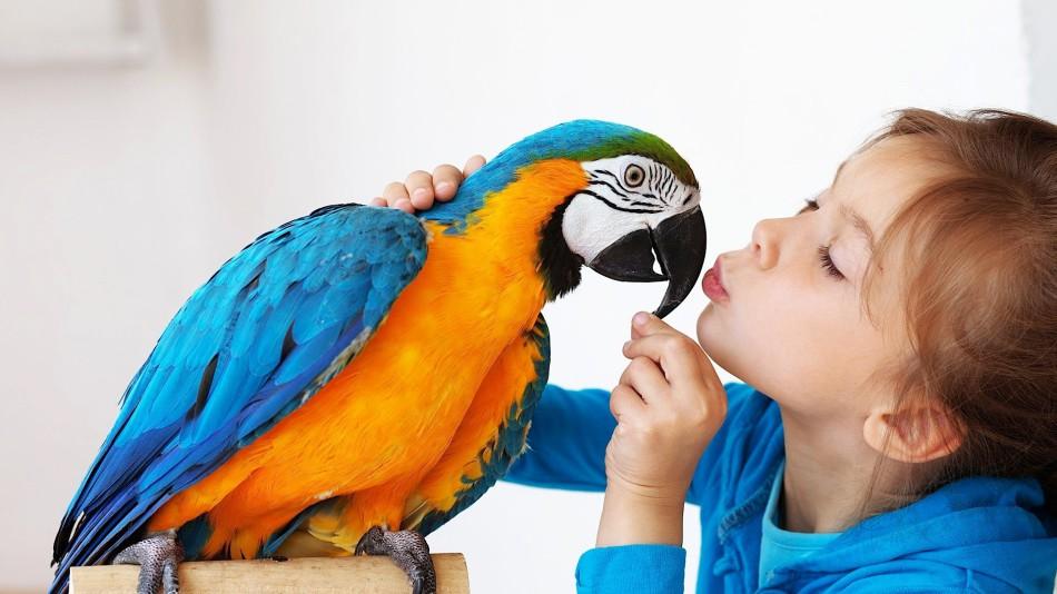 Birds As A Pet