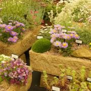 4 Most Beautiful Gardening Flowers Your Garden Missing