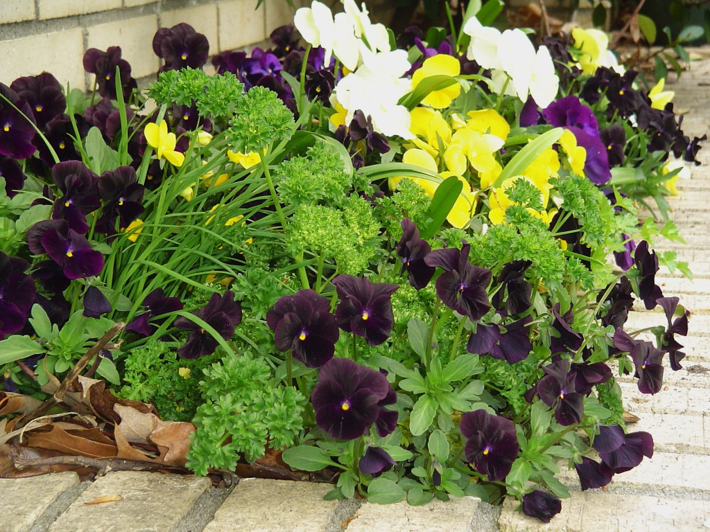 4 Most Beautiful Gardening Flowers Your Garden Missing