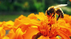 find a bee removal orange county company
