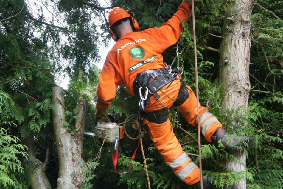 Things To Know Before Hiring Tree Surgeons Ruislip