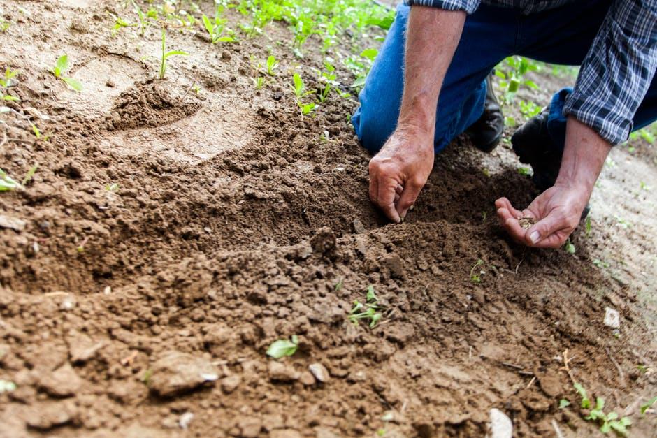 Backyard Of Fruits: Secret Of Having A Satisfying Garden